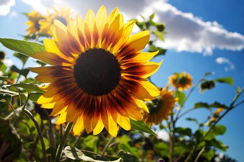 Sun, Flower. Flower, Sun.