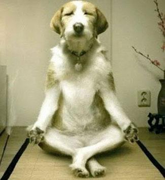dog-meditating-daily