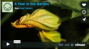 a-year-in-the-garden