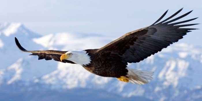 eagle-flying-cliff